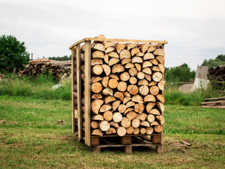 Fotografie dřeva
